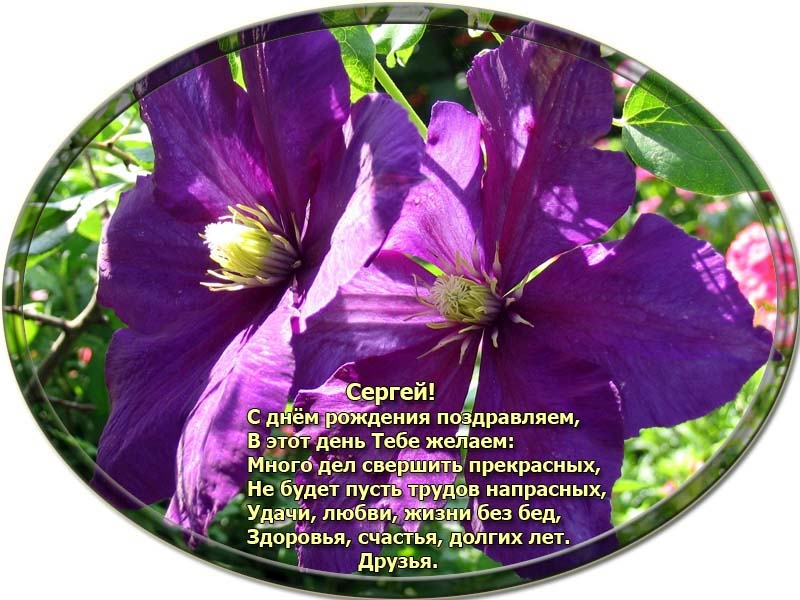 posdravljaem_sergei-nikitin