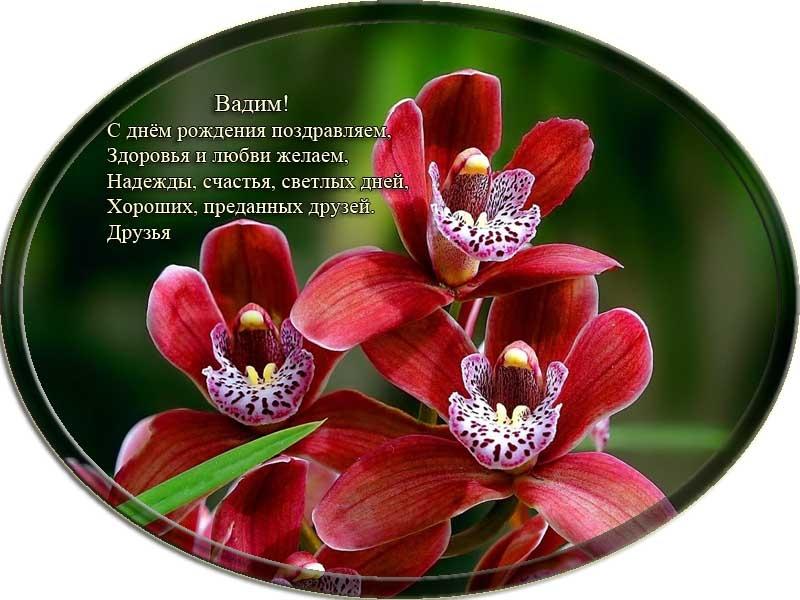 posdravljaem_vadim-shved