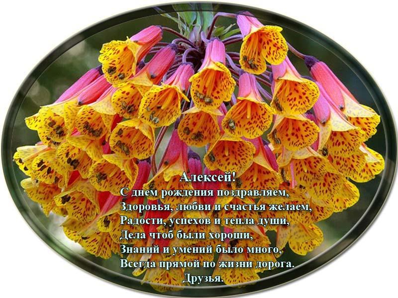 posdravljaem_aleksei-jakovlev