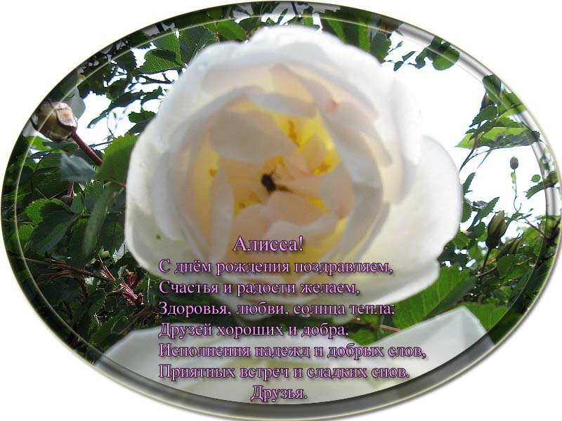 posdravljaem_alissa-issaevskaja