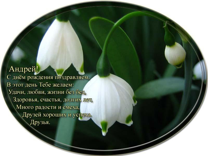 posdravljaem_andrei-jerjomin