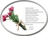 buket-tjulpany_derosev