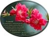 posdravljaem_aleksei-prijomoshev
