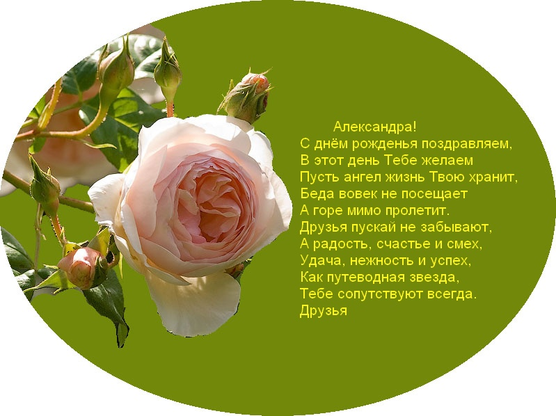 posdravljaem_aleksandra_kol