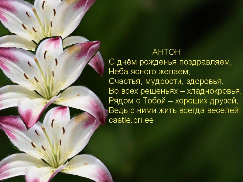 posdravljaem_anton_pe