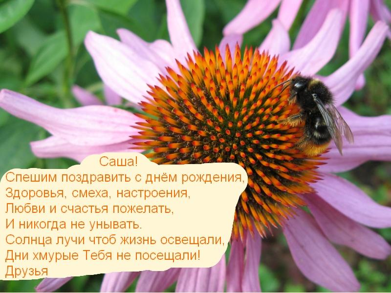 posdravljaem_sasha_titov