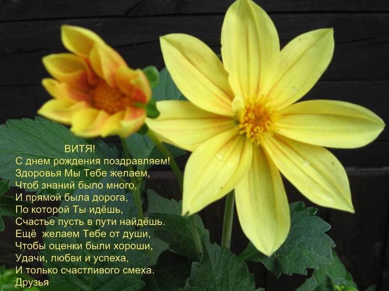 posdravljaem_vitja_masl