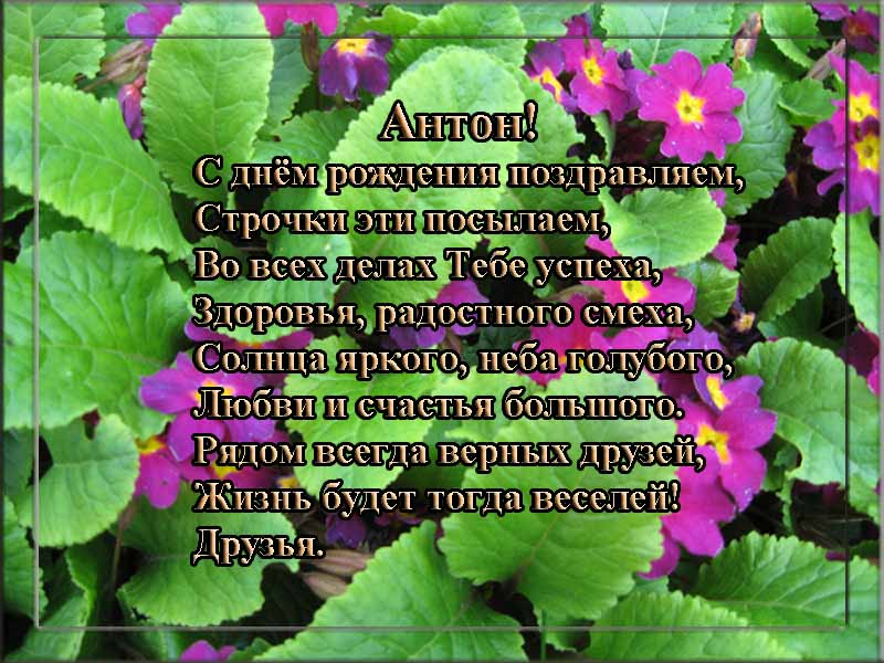 posdravljaem_anton_popov