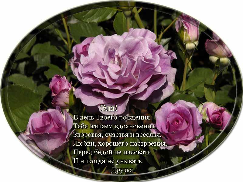 posdravljaem_elja_mazurenko
