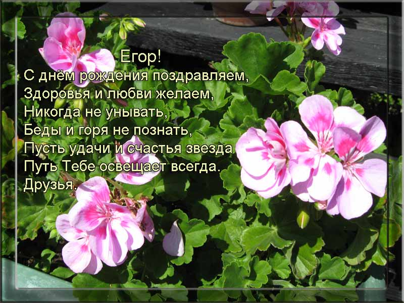 posdravljaem_jegor_mljavov