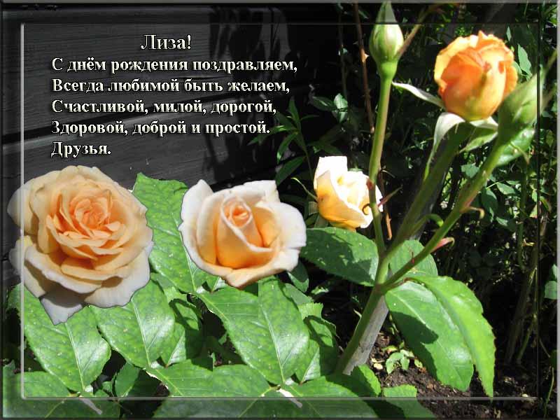 posdravljaem_liza_stepanova