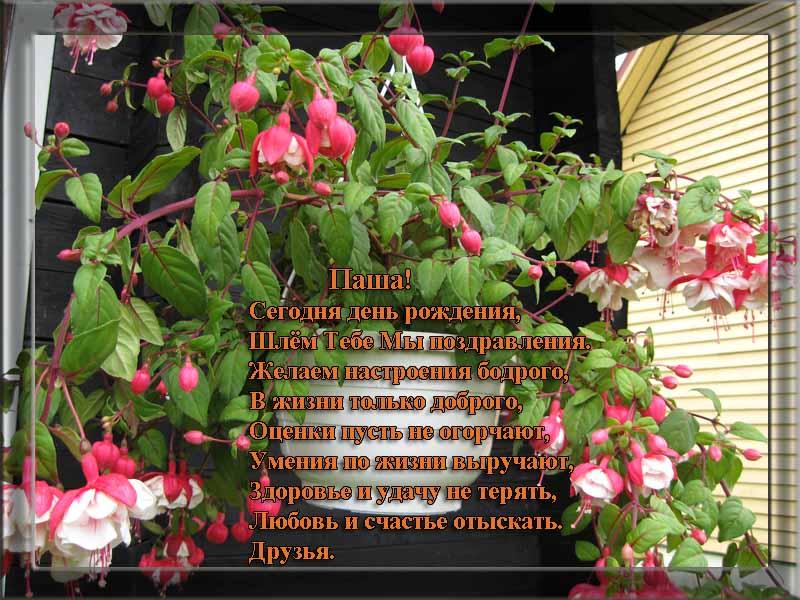 posdravljaem_pavel_solovjov