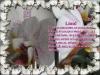 posdravljaem_liina_lii