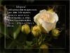 posdravljaem_maria_volohova