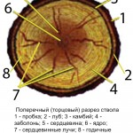 drevesina 1